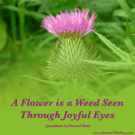 flower quotes inspirational quotes about flower