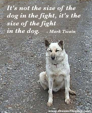 funny dog quotes to live by